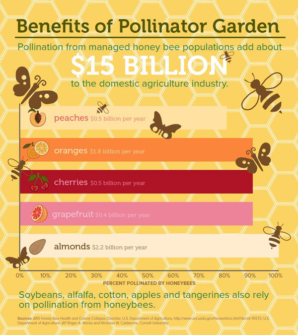 ONG pollinator conservation